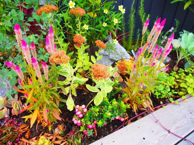 風花庭 花壇
