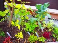家庭菜園 ガーデニング