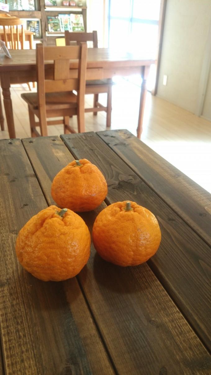 外構 オレンジ
